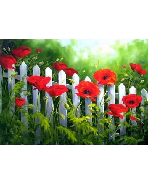 Garden Poppies WD008