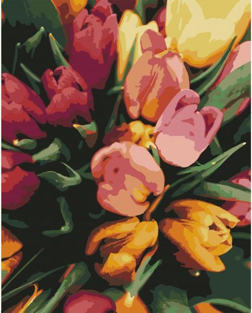 T40500339 Tender Tulips