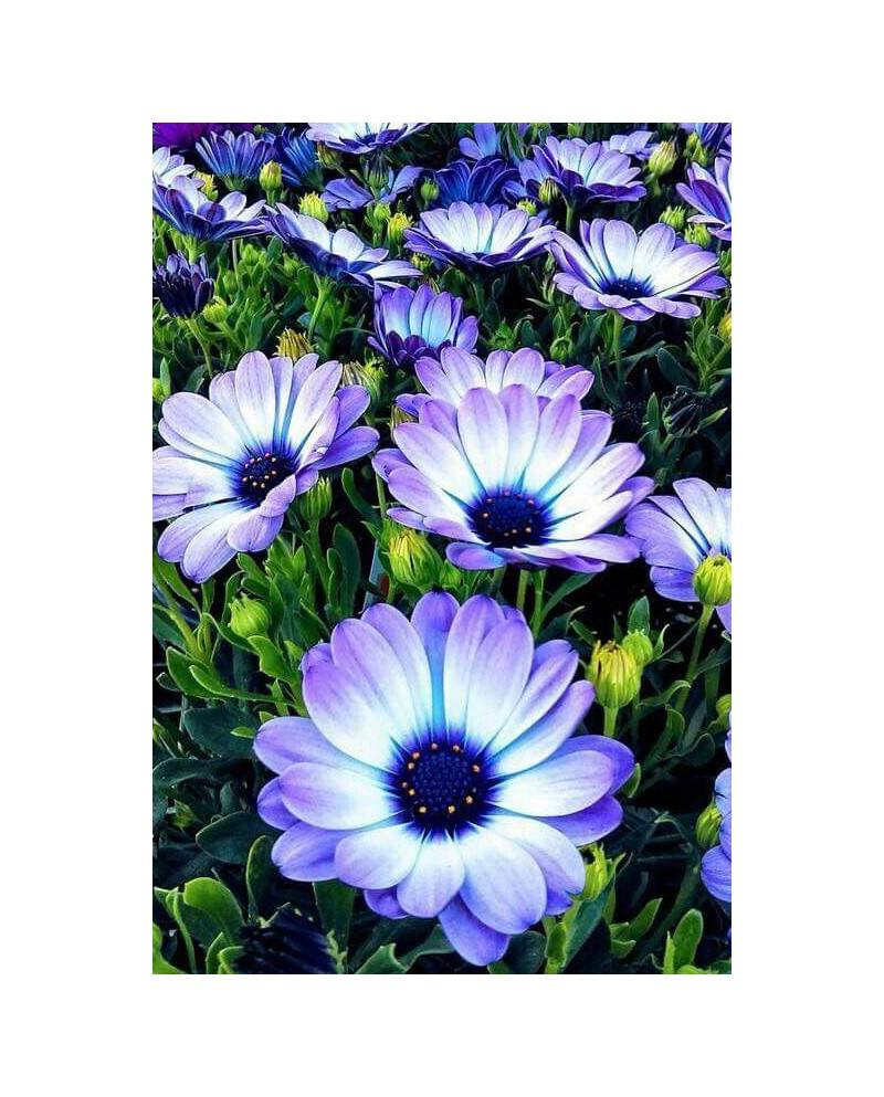 Alpine Flowers WD2394