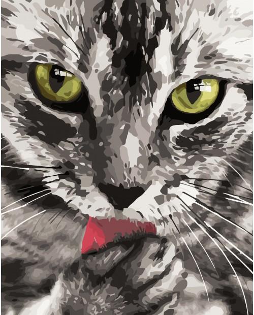 H031 Cat