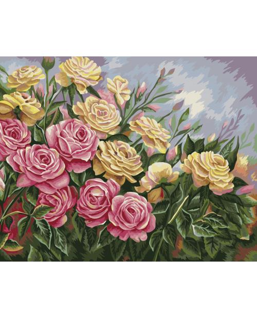 B062 Розы