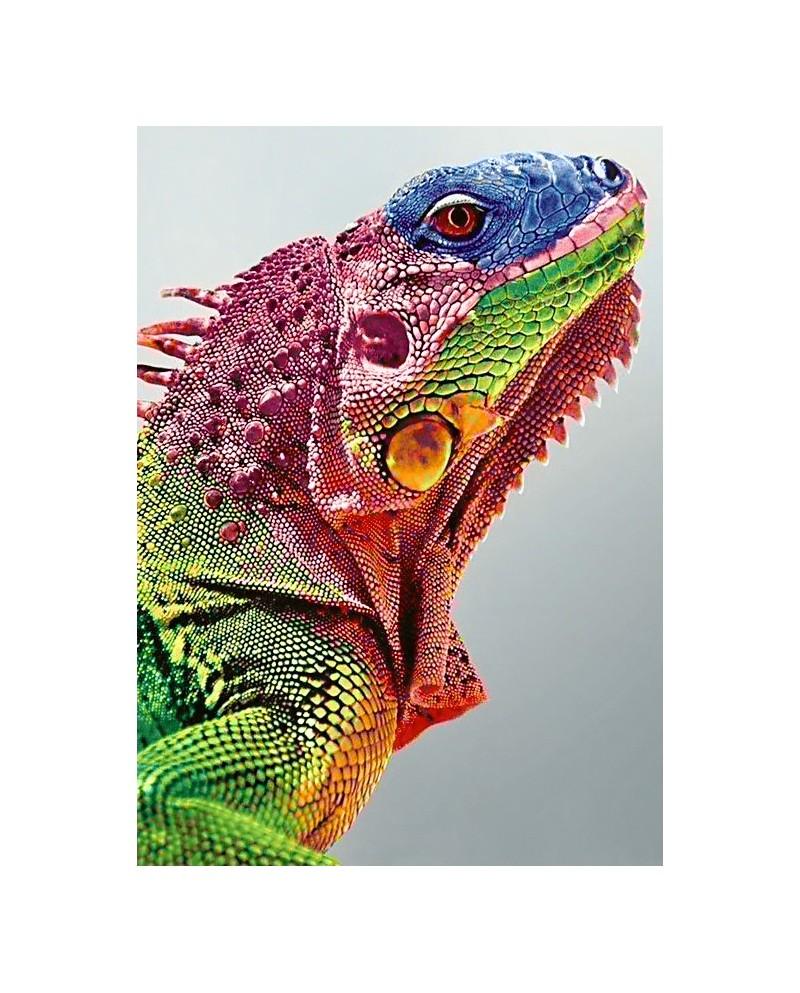 Iguana WD065