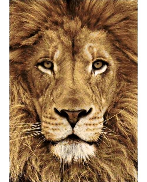 Lion WD068