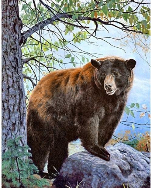 Бурый Медведь WD083