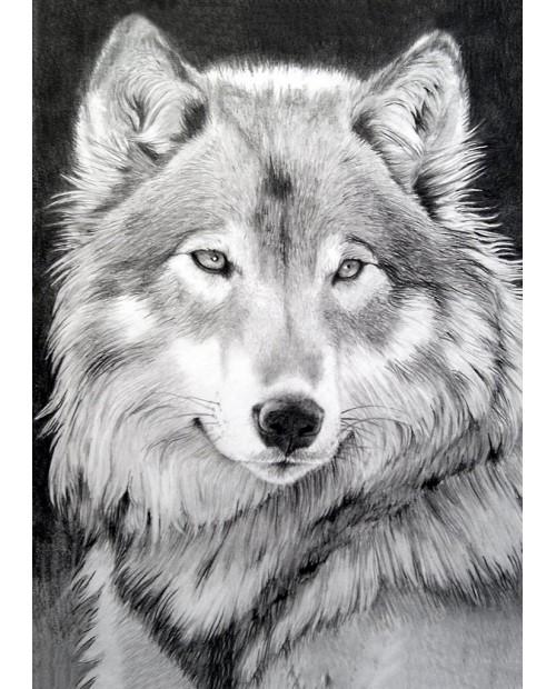 Серый Волк WD086