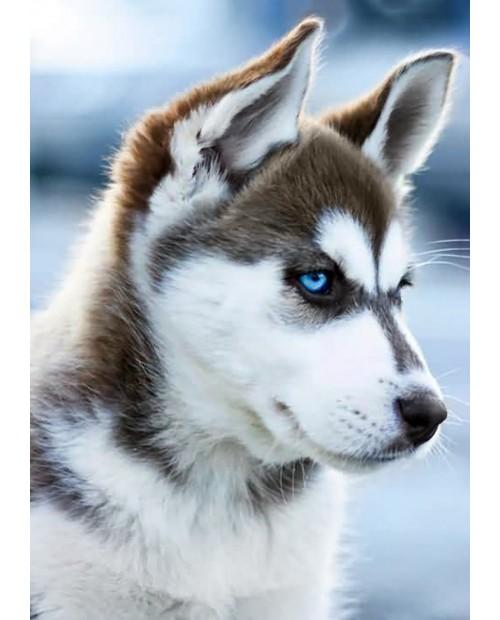 Снежный Пес WD088